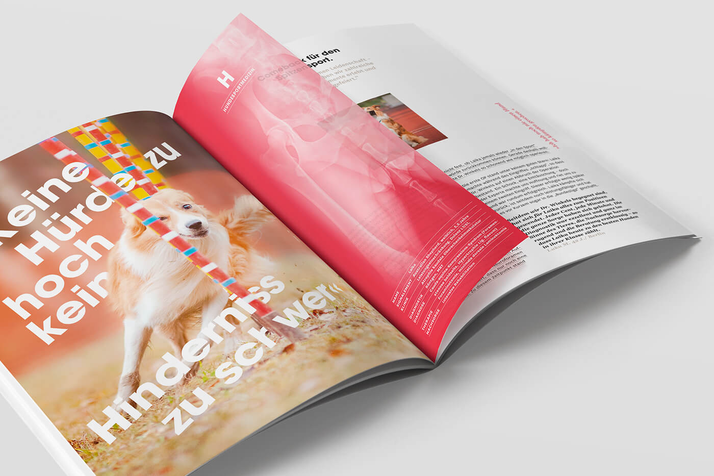 tierklinik marketing werbeagentur münster broschüre